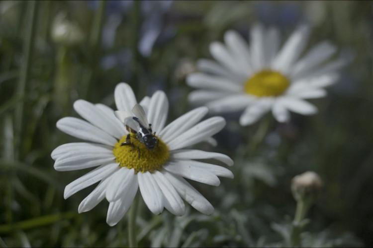 blackmirror-bee.png.jpeg